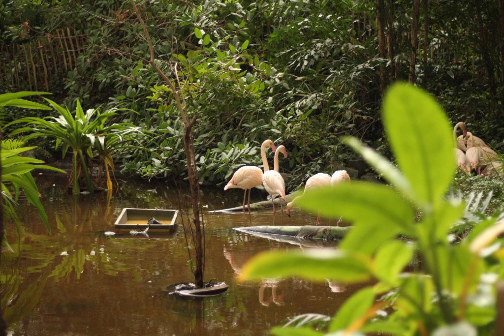 Der Regenwald im Tropical Islands