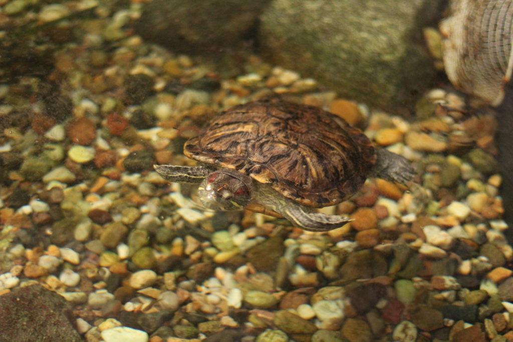 Schldkröten im Tropicals Islands