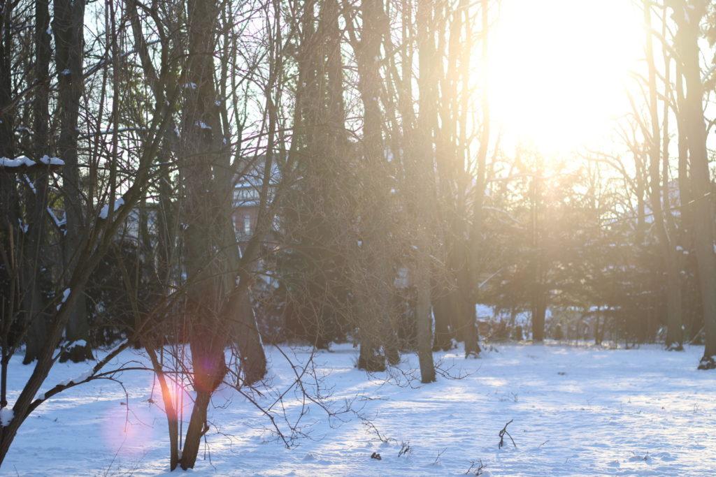 Schnee im Lindenpark in Rostock
