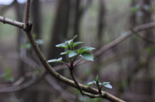 Waldspaziergang für mehr Ruhe