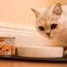 Hochwertiges Nassfutter für Katzen
