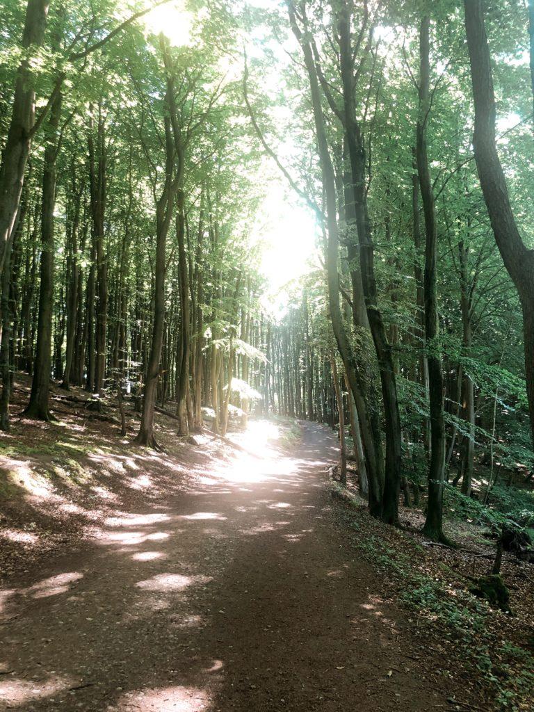Alte Buchenwälder im Nationalpark Jasmund